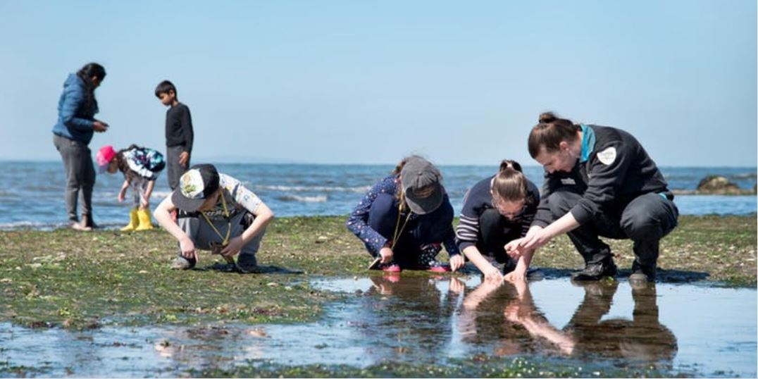 Junior Rangers Rockpool Ramble